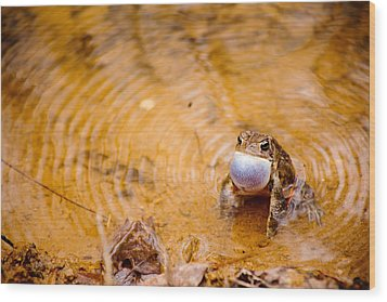 Wood Print featuring the photograph Calling All Frogs by Courtney Webster
