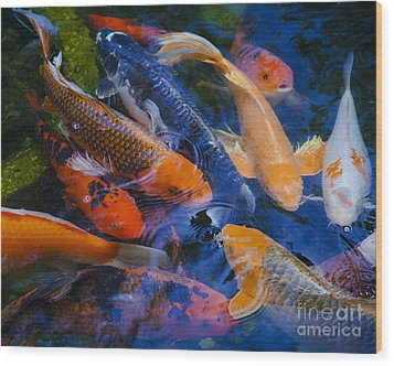 Wood Print featuring the photograph Calm Koi Fish by Jerry Cowart