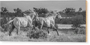 Camargue Stallions Wood Print by Heather Swan