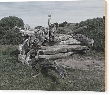 Cambria Driftwood Bench 3 Wood Print