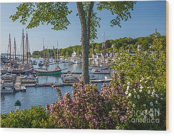Camden Harbor Spring Wood Print by Susan Cole Kelly