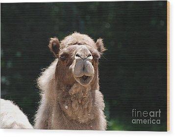 Camel Wood Print by DejaVu Designs