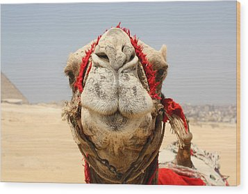 Camel Kiss Wood Print by Laura Hiesinger