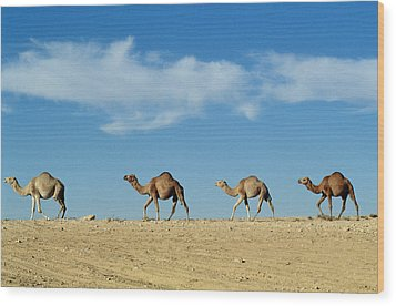 Camel Train Wood Print by Anonymous