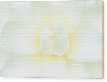 Wood Print featuring the photograph Camelia Flower by Chris Scroggins