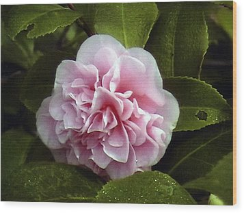 Wood Print featuring the photograph Camellia In Rain by Patrick Morgan
