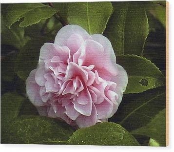 Camellia In Rain Wood Print