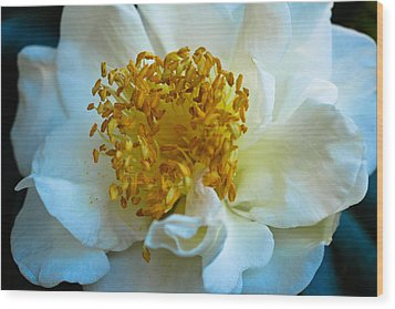 Wood Print featuring the photograph Camellia by Julie Andel