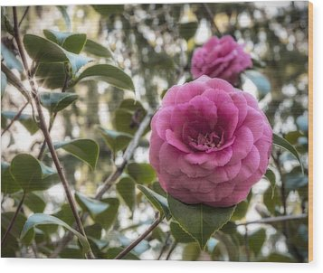 Camellia Sparkle Wood Print by Loree Johnson