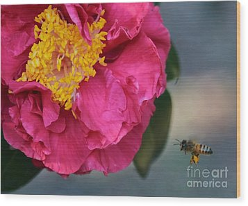 Camellia With Bee Wood Print by Carol Groenen