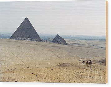 Wood Print featuring the photograph Camels At Giza by Cassandra Buckley