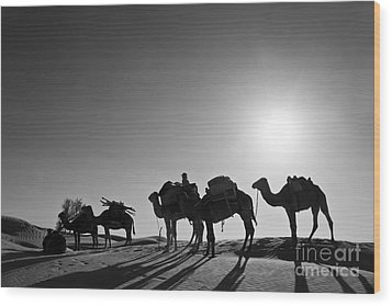 Camels Wood Print by Delphimages Photo Creations
