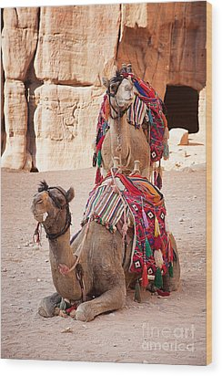 Camels In Petra Wood Print by Jane Rix
