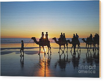 Camels On The Beach Broome Western Australia Wood Print by Colin and Linda McKie