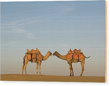 Camels Stand Face To Face In The Thar Wood Print