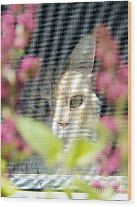 Cameo Peeking Through The Screen Wood Print by Judy Via-Wolff