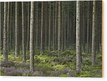 Wood Print featuring the photograph Camore Wood Scotland by Sally Ross