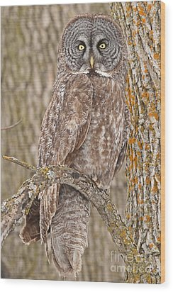 Camouflage-an Owl's Best Friend Wood Print by Heather King