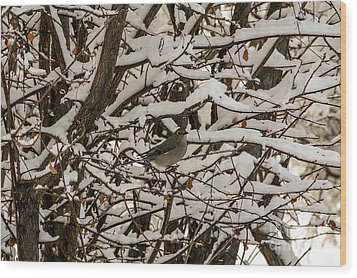 Wood Print featuring the photograph Camouflaged Thrush by Sue Smith