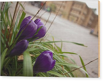 Wood Print featuring the photograph Campus Crocus by Erin Kohlenberg