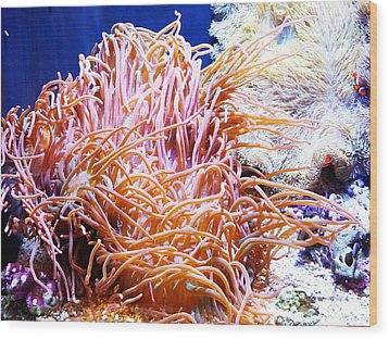 Can You Find Nemo Wood Print by Kelly Reber