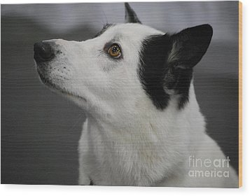 Canaan Dog Wood Print by DejaVu Designs