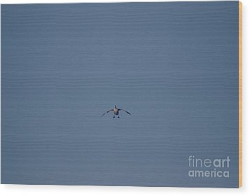 Wood Print featuring the photograph Canada Cleared For Landing by Mark McReynolds