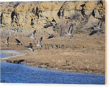 Canada Geese Along The Green River Wood Print by Eric Nielsen