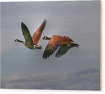 Canada Geese In Flight Wood Print by Larry Trupp
