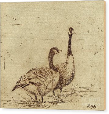 Canada Geese Wood Print by Neil Rizos