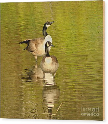 Wood Print featuring the photograph Canada Geese Pair by Bob and Jan Shriner