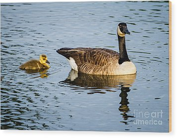 Canada Goose And Gosling Wood Print by Dawna  Moore Photography
