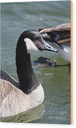 Wood Print featuring the photograph Canada Goose Profile by Anita Oakley