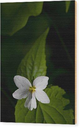 Canada Violet Wood Print by Melinda Fawver