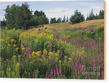 Wood Print featuring the photograph Canada Wildflower Meadow by Chris Scroggins