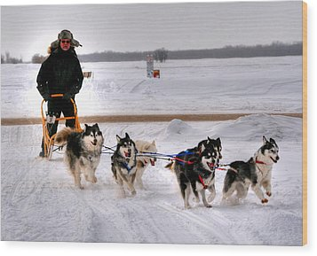 Canadian Dogsled Team Wood Print by Larry Trupp