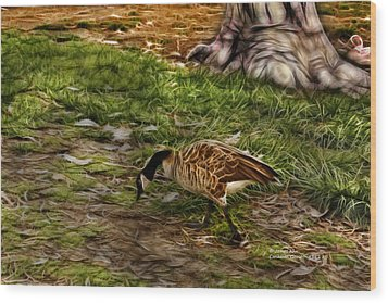 Canadian Goose 9382 F S Wood Print by James Ahn