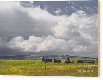 Canadian Prairie Wood Print by Charline Xia