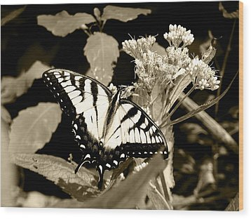 Canadian Tiger Swallowtail In Sepia Wood Print
