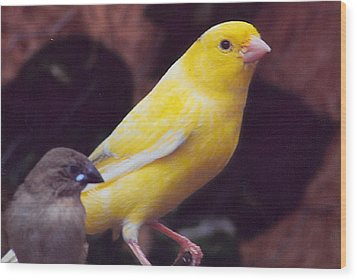 Canary And Finch Wood Print