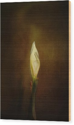 Candle In The Wind Wood Print by Anne Rodkin