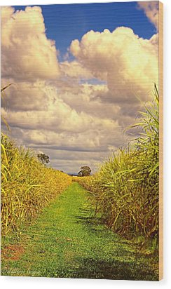 Cane Fields Wood Print by Wallaroo Images