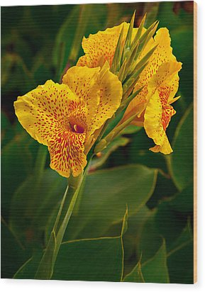 Canna Blossom Wood Print by Mary Jo Allen