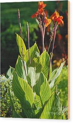 Canna Lily Wood Print by Optical Playground By MP Ray