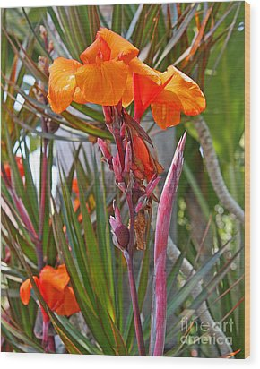 Canna Lily With New Growth Wood Print by Kenny Bosak