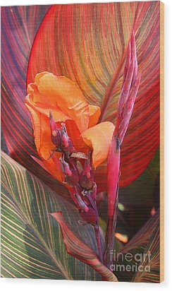 Canna Lily's New Growth Wood Print by Kenny Bosak