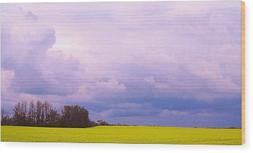 Canola Field Wood Print by Cathy Long
