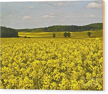 Canola Field Wood Print by Heiko Koehrer-Wagner