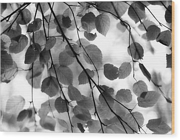 Canopy Wood Print by Aaron Aldrich