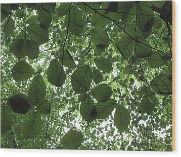 Canopy In Green 3 Wood Print